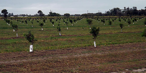 FNC Plantations - Meadowvale Macadamia Orchard