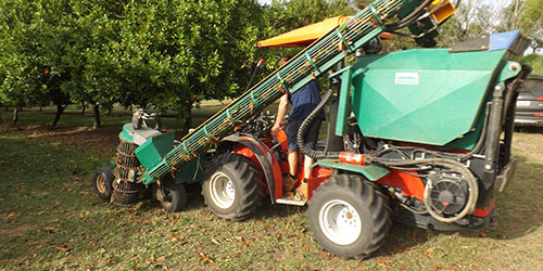 FNC Plantations - Welcome Creek Macadamia Orchard