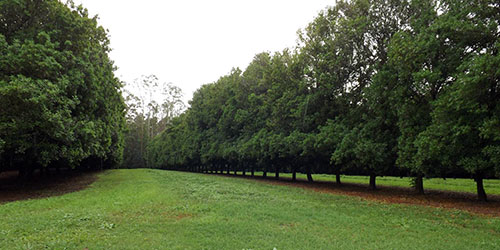 FNC Plantations - Wilsons Pocket Macadamia Orchard