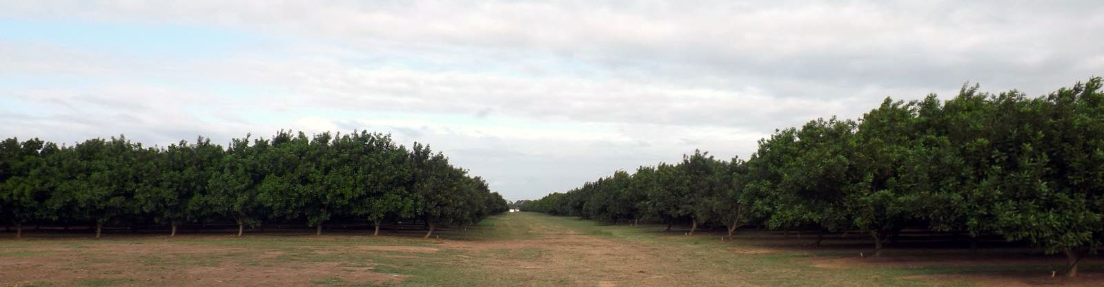 Welcome Creek Orchard